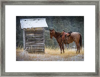Trusty Horse  Framed Print by Inge Johnsson