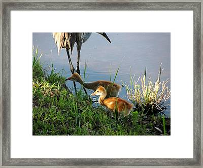 Trying To Catch... Framed Print by Zina Stromberg