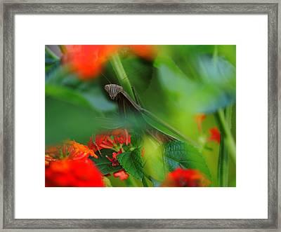 Trying To Hide Praying Mantis Framed Print by Raymond Salani III