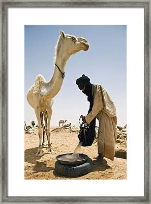 Tuareg Nomad Watering Camel, Escarpment Framed Print by Alberto Arzoz