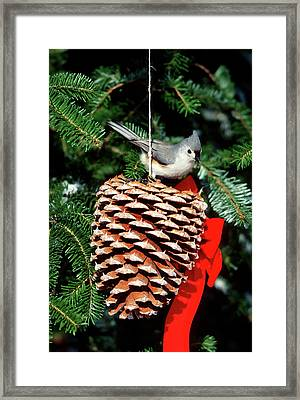 Tufted Titmouse (baeolophus Bicolor Framed Print by Richard and Susan Day