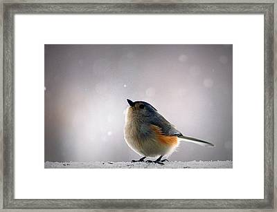 Tufted Titmouse Framed Print by Cricket Hackmann