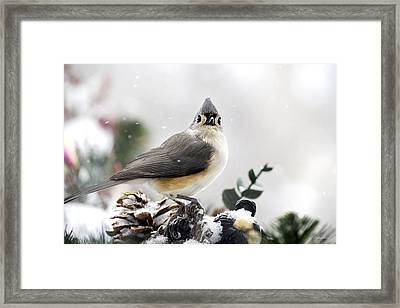 Tufted Titmouse In The Snow Framed Print by Christina Rollo