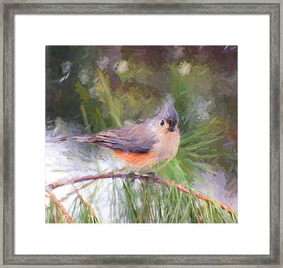 Tufted Titmouse On A Pine Branch - Digital Painting Framed Print by Kerri Farley
