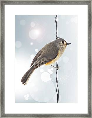 Tufted Titmouse Twinkle Framed Print by Bill Tiepelman