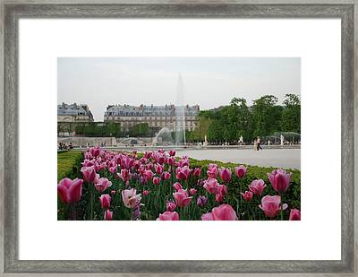 Tuileries Garden In Bloom Framed Print by Jennifer Ancker