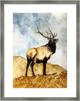 Tule Elk Framed Print by Michael Vigliotti