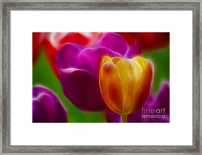 Tulip-7011-fractal Framed Print by Gary Gingrich Galleries