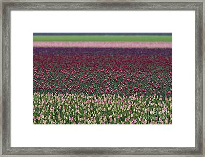 Tulip Abstract Framed Print by Mark Kiver