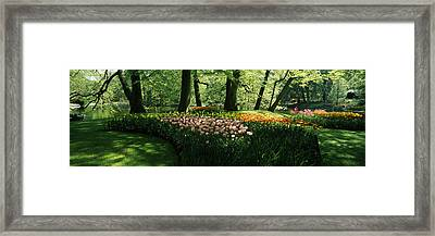 Tulip Flowers And Trees In Keukenhof Framed Print by Panoramic Images