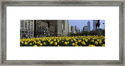 Tulip Flowers In A Park With Buildings Framed Print by Panoramic Images