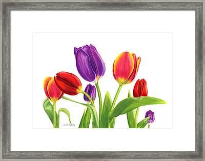 Tulip Garden On White Framed Print by Sarah Batalka