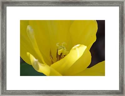 Tulip Heart Framed Print by Maria Urso