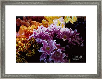 Tulip Heaven Framed Print by Cheryl Young