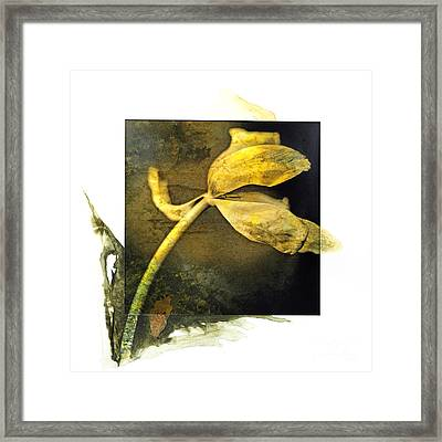 Tulip On A Textured Brown Background. Framed Print by Bernard Jaubert