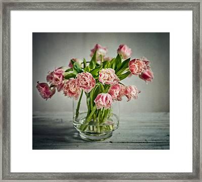 Tulip Still Life Framed Print by Nailia Schwarz