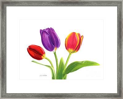 Tulip Trio Framed Print by Sarah Batalka