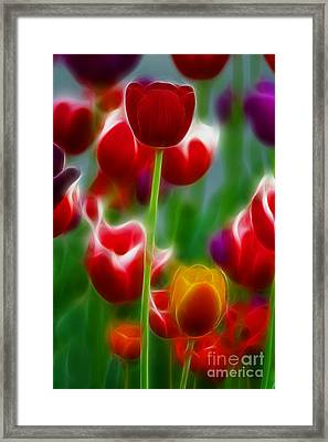 Tulips-7069-fractal Framed Print by Gary Gingrich Galleries
