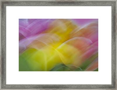 Tulips Abstract Framed Print by Susan Candelario
