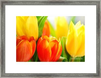 Tulips Framed Print by Elena Elisseeva