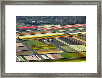 Tulips Fields, Lisse Framed Print by Bram van de Biezen
