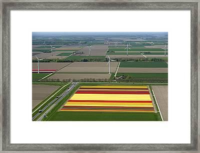 Tulips Fields, Zeewolde Framed Print by Bram van de Biezen