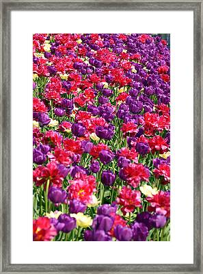 Tulips In A Meadow Framed Print by Toppart Sweden