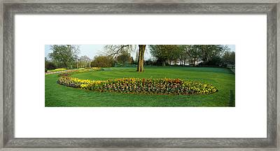 Tulips In Hyde Park, City Framed Print by Panoramic Images