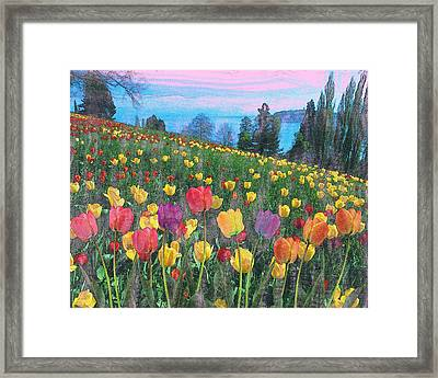 Tulips Lake Framed Print by Anthony Caruso