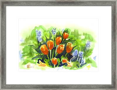 Tulips With Blue Grape Hyacinths Explosion Framed Print by Kip DeVore