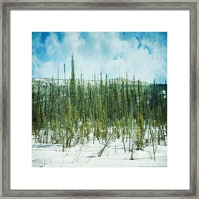 Tundra Forest Framed Print by Priska Wettstein