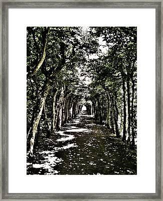 Tunnel Of Trees ... Framed Print by Juergen Weiss
