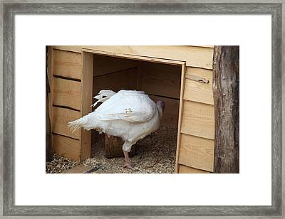 Turkey - Mt Vernon - 01132 Framed Print by DC Photographer