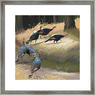 Turkeys In The Fall Sun Framed Print by Pam Little