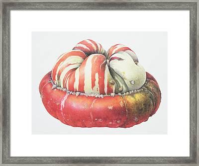 Turks Turban Squash Framed Print by Margaret Ann Eden