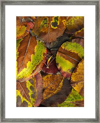 Turning Leaves 4 Framed Print by Stephen Anderson