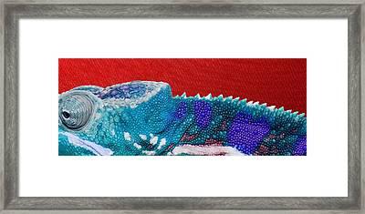 Turquoise Chameleon On Red Framed Print by Serge Averbukh
