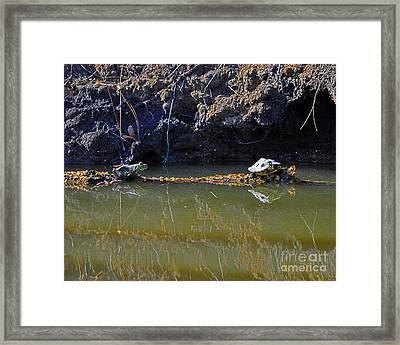 Turtle And Frog On A Log Framed Print by Al Powell Photography USA