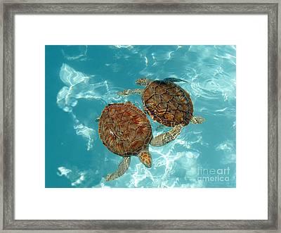 Turtle Dance Framed Print by Irina Davis