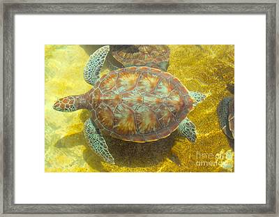 Turtle Day Framed Print by Carey Chen