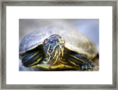 Turtle Framed Print by Elena Elisseeva