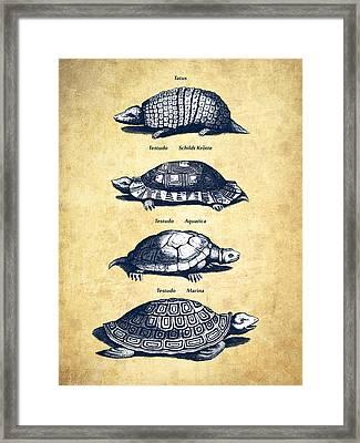 Turtles - Historiae Naturalis - 1657 - Vintage Framed Print by Aged Pixel