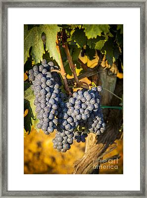 Tuscan Vineyard Framed Print by Brian Jannsen