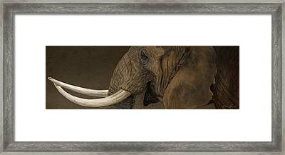 Tusker Framed Print by Aaron Blaise