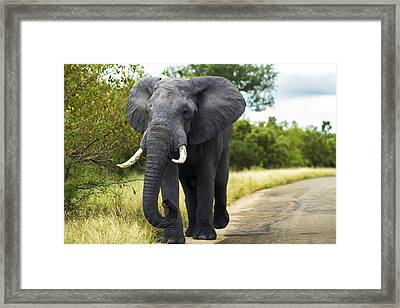 Tusker With Attitude Framed Print by Peter Turner