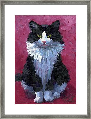 Tuxedo Cat Framed Print by Alice Leggett