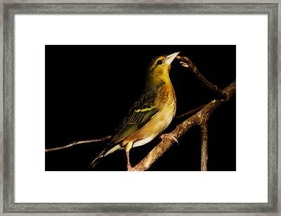 Tweety Bird Framed Print by Martin Newman