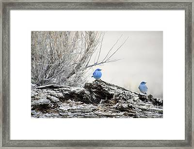 Twice As Happy Framed Print by Deby Dixon