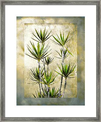 Twiggy Palm Framed Print by Stephen Warren