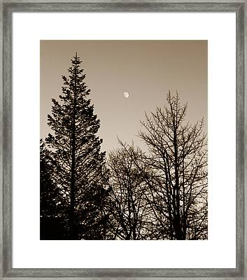 Twilight Moon Framed Print by Marilyn Hunt